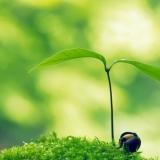 Training Intuïtieve Ontwikkeling I | Lunteren (ede)