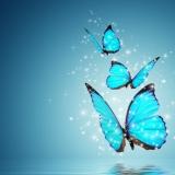 Leef je hooggevoeligheid als kracht!   Doetinchem