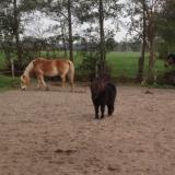Workshop (systemische) Paardencoaching | Stoutenburg