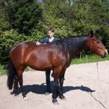 Craniosacraal therapie voor mensen en paarden   Haarlem