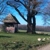 Pelgrimage Kroezeboom | Fleringen